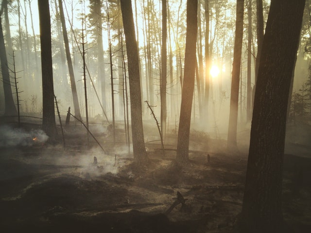 Wildfire smoke in a forest